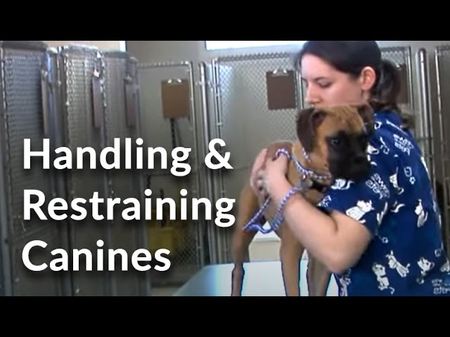 Veterinary Technician And Assistant Training Handling And