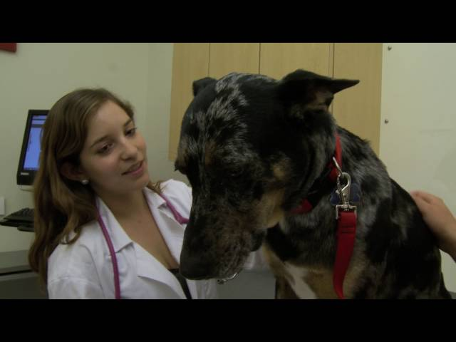 Free Rabies Clinic For Dogs In Maine
